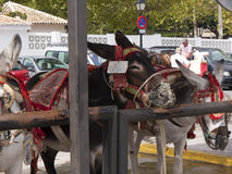 Donkey Taxis in Mijas one of the most beautiful 'white' villages Royalty Free Stock Images