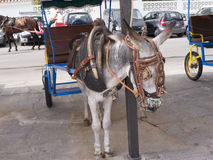 Donkey Taxis in Mijas one of the most beautiful 'white' villages Stock Photos