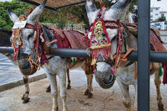 Donkey Taxis in Mijas one of the most beautiful 'white' villages Stock Images
