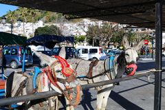 Donkey taxis in Mijas Pueblo. Donkey taxis waiting in Mijas Pueblo in Malaga region, Spain royalty free stock image