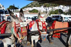 Donkey taxis lined up in Mijas Pueblo. Donkey taxis waiting to take tourists for a ride around Mijas Pueblo in Malaga region, Spain stock photo