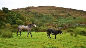A donkey telling a filly to keep away royalty free stock photos