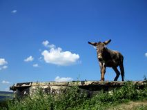 Donkey on top Royalty Free Stock Photo