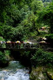 Donkey train crossing River and waterfalls Stock Photography