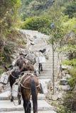 The donkey transport the stone Stock Image