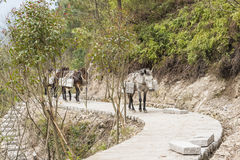 The donkey transport the stone royalty free stock photography