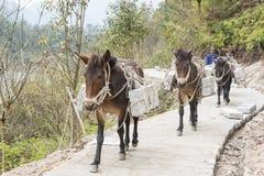 The donkey transport the stone Royalty Free Stock Photo