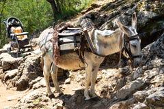 Donkey transportation in Cretan mountains Royalty Free Stock Image