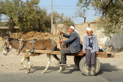 Donkey transportation Stock Images