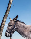A donkey and tree from up close Royalty Free Stock Image