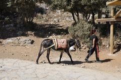 Psychro, august 29th: Donkey for the trip to the Cave of Zeus in Dikti mountains from Crete island of Greece. Donkey for the trip to the Cave of Zeus in Dikti royalty free stock photo