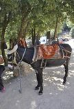 Psychro, august 29th: Donkey for trip to the Cave of Zeus in Dikti mountains from Crete island of Greece. Donkey for trip to the Cave of Zeus in Dikti mountains stock photo