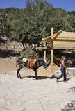 Psychro, august 29th: Donkey for trip to the Cave of Zeus in Dikti mountains from Crete island of Greece. Donkey for trip to the Cave of Zeus in Dikti mountains stock image