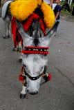 Donkey under the blanket and saddle Stock Images