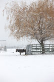 Donkey under a tree in snow. Royalty Free Stock Photography