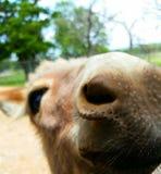 Donkey. Up close Stock Photo