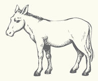 Donkey. Vector drawing Royalty Free Stock Photos