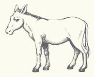 Donkey. Vector drawing Royalty Free Stock Photos