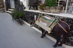Donkey in village exo gonia on santorini Stock Photo