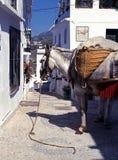 Donkey in village street, Frigiliana. Royalty Free Stock Photos