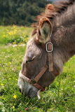 Donkey Vosges Mountains Royalty Free Stock Photos