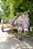 Donkey wagon in a tree shade Stock Image