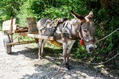 Donkey wagon in a tree shade Royalty Free Stock Image
