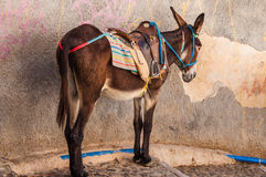 Donkey waiting for a passenger Royalty Free Stock Photography
