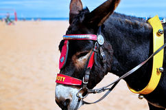 Donkey waiting for ride Royalty Free Stock Photography