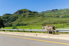 Donkey Walking Valley Road Royalty Free Stock Photography