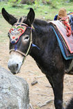 A donkey was kitted in the countryside near Paro (Bhutan) Royalty Free Stock Photo