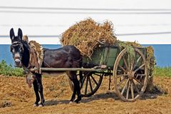 Donkey wating with his load. Donkey waiting with his load Royalty Free Stock Photos