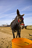 Donkey on Weston beach. Donkey on Weston-Super-Mare beach royalty free stock photo