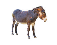Donkey on white Royalty Free Stock Image