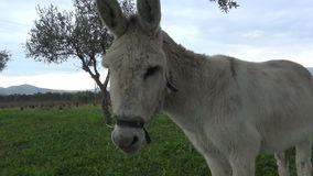 Donkey (2) stock video footage
