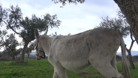 Donkey (4) stock video footage