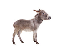 Donkey on white Stock Photos