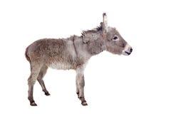 Donkey on white Royalty Free Stock Photos