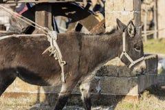 Donkey work on the farm Stock Image