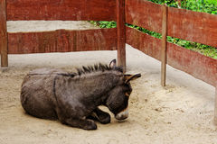 Donkey in zoo. In Europe Stock Photos