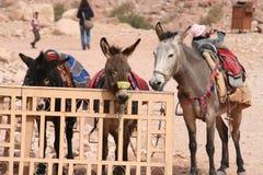 Donkeyriding in ptera, jordan Stock Photos