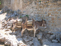 Donkeys. Donkey Taxi's, Lindos, Rhodes royalty free stock photos