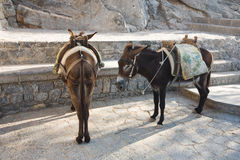 Donkeys. Two donkeys standing in Lindos, Rhodes island, Greece Stock Photography
