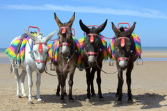 Donkeys at a beach resort. Four donkeys at a beach resort in UK Stock Photos