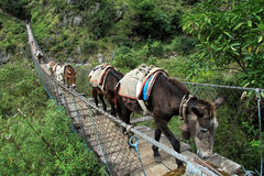 Donkeys on the bridge Royalty Free Stock Images