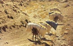 Donkeys caravan Stock Photography