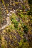 Donkeys carry goods along extremally dangerous paths in highland. S of Nepal Stock Images