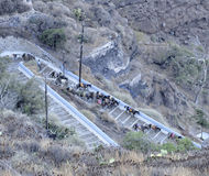 Donkeys descending cliff path Stock Photo
