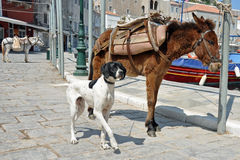 Donkeys and dog Stock Photos