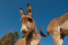 Donkeys. Grazing in freedom n Stock Photo
